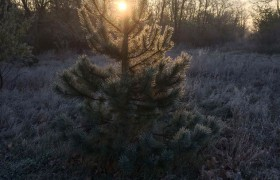 der_erste_frost_14112016